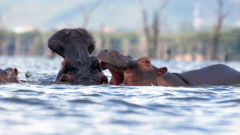 Lago-Naivasha-Kenia