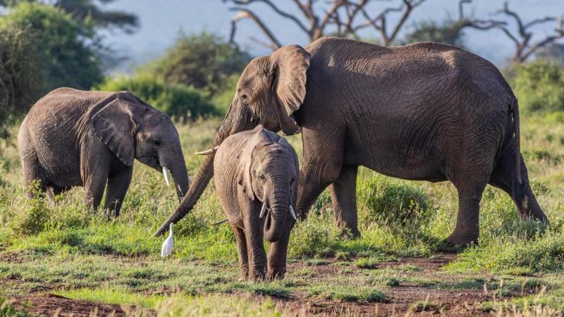 Parque-Nacional-Amboseli-Kenia-2